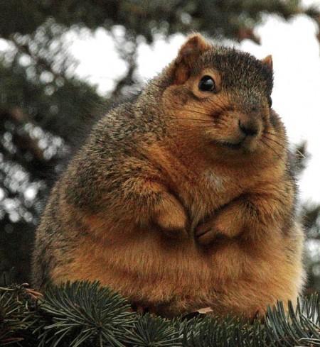 Fat Squrriel Returns!